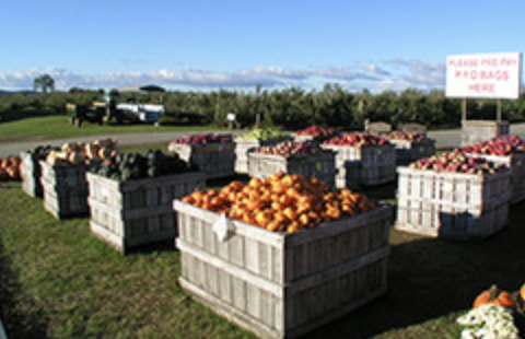 Crates filled with apples