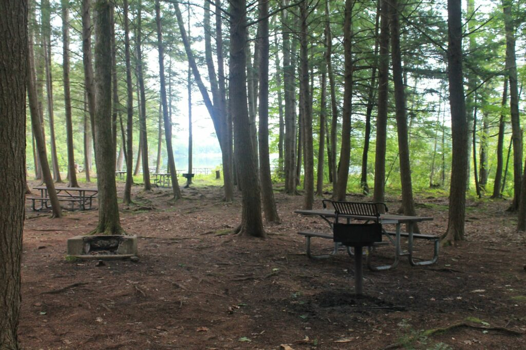 Hiking area, picnic tables, and treed area of Greenfield State Park