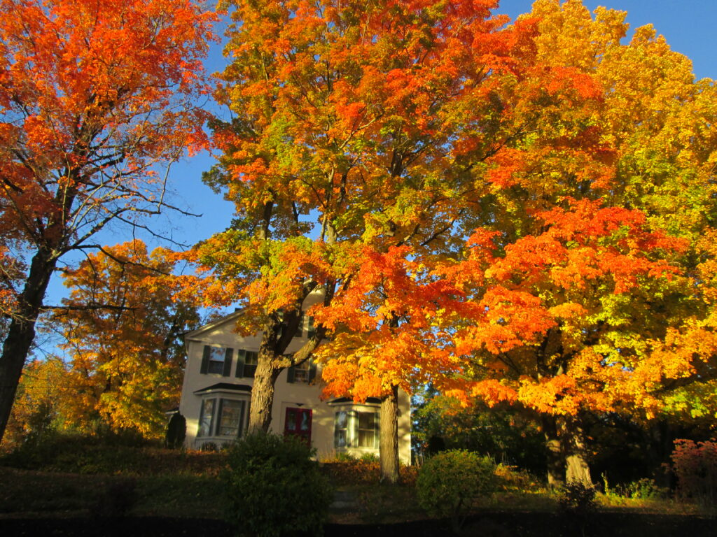 One of the region's inns, peeking through the maple trees, orange with blue sky in the background
