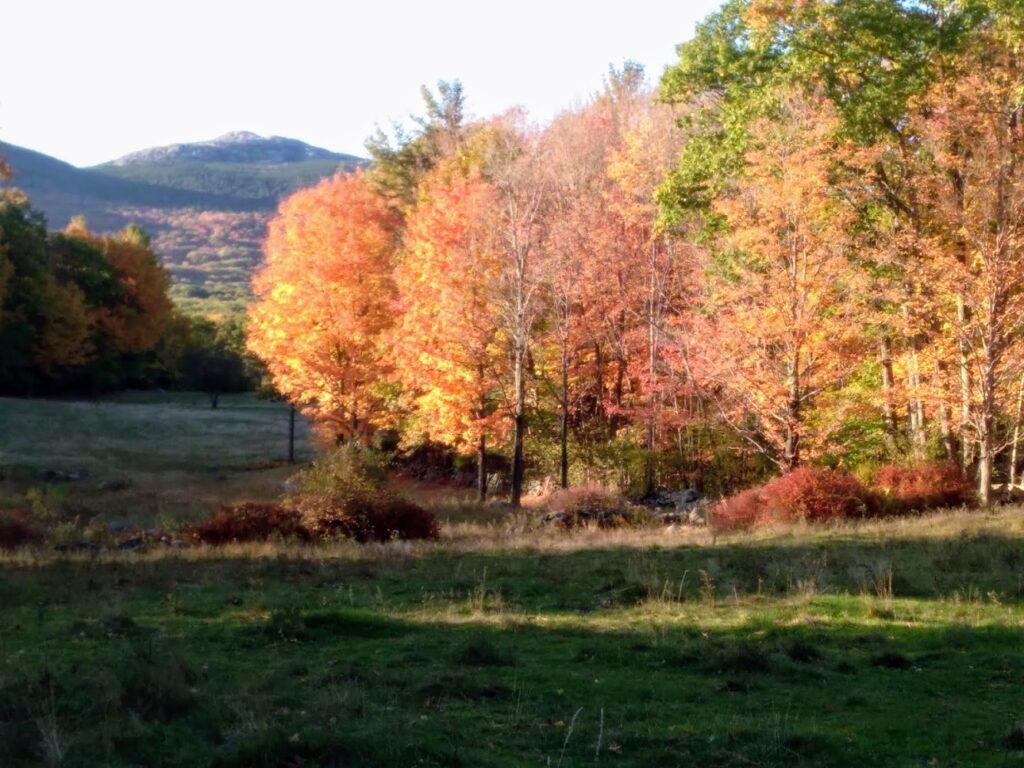 Mount Monadnock from Rt. 124 with colorful trees on the side of Rt. 124 - photo by Sonja Bolton