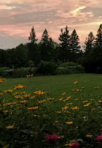 Gorgeous view of Aldworth Manor's property - green grass, colorful wildflowers, deep green pines and the setting sun