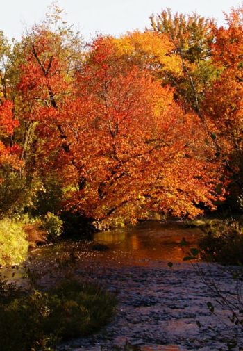 Brilliantly colored trees in yellow, red and orange surrounding a river