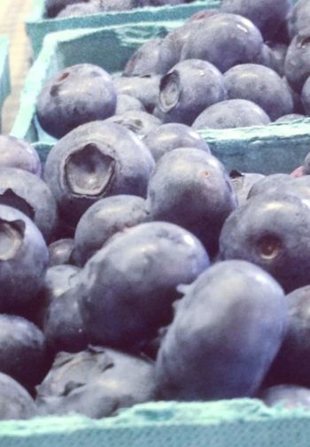 Several light blue containers filled with plump blueberries