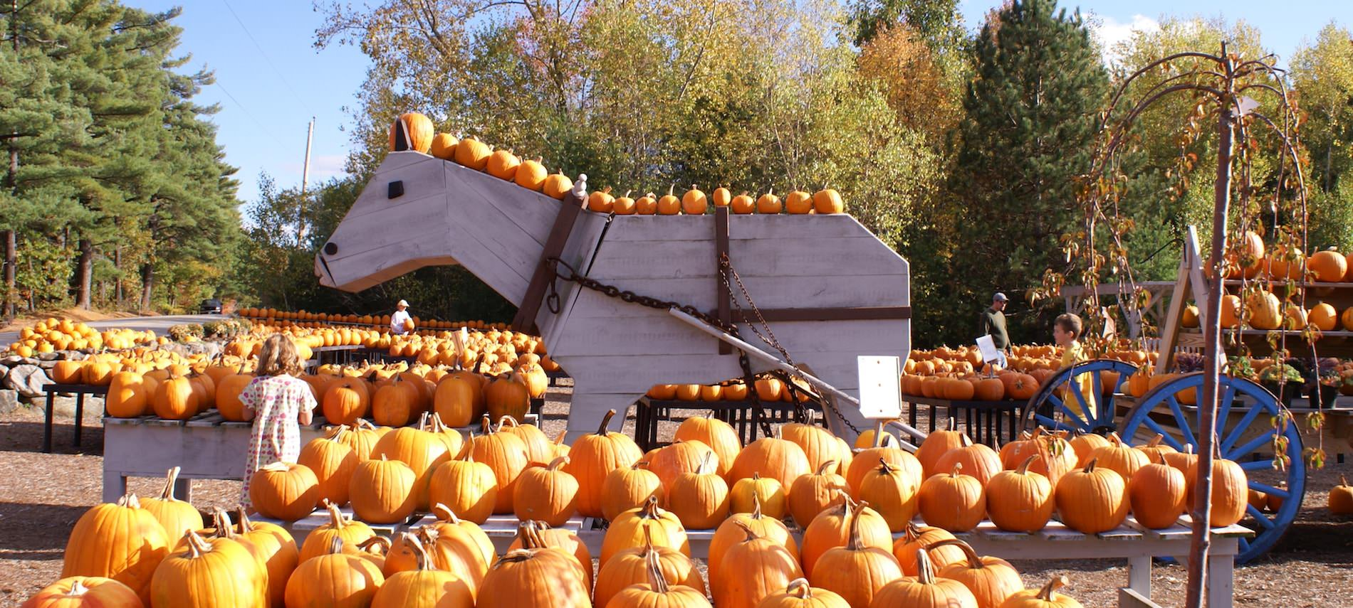 A few people looking at rows of pumpkins outside