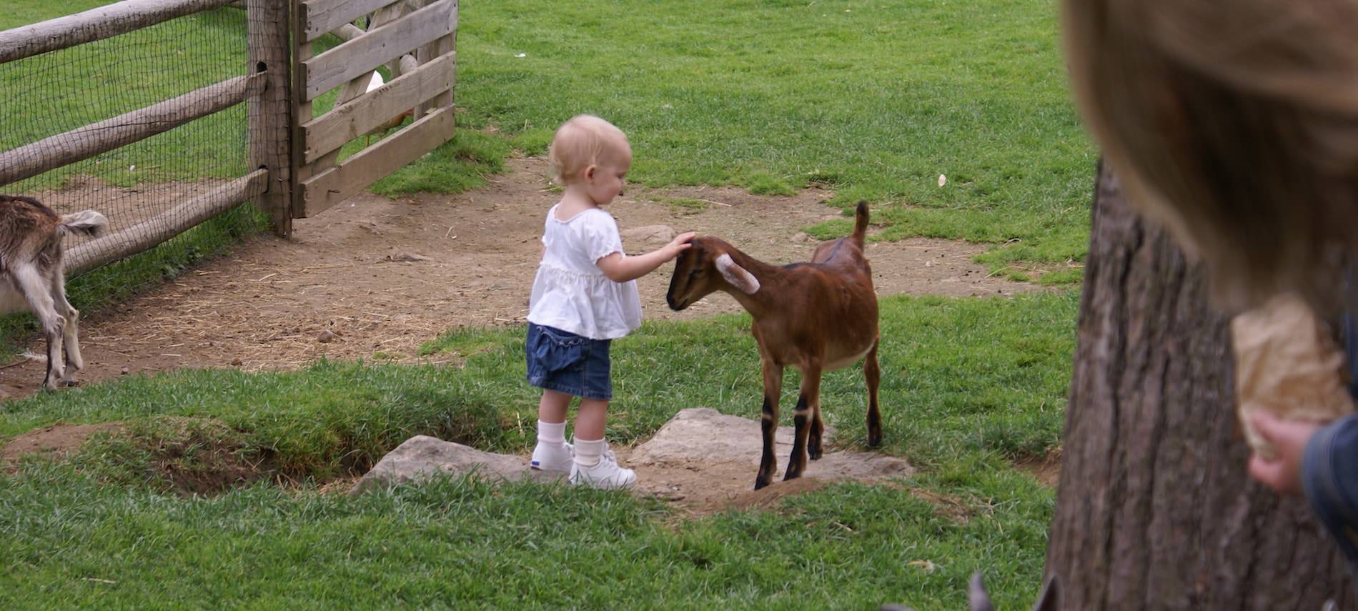 Small child petting a goat amidst grass and fencing