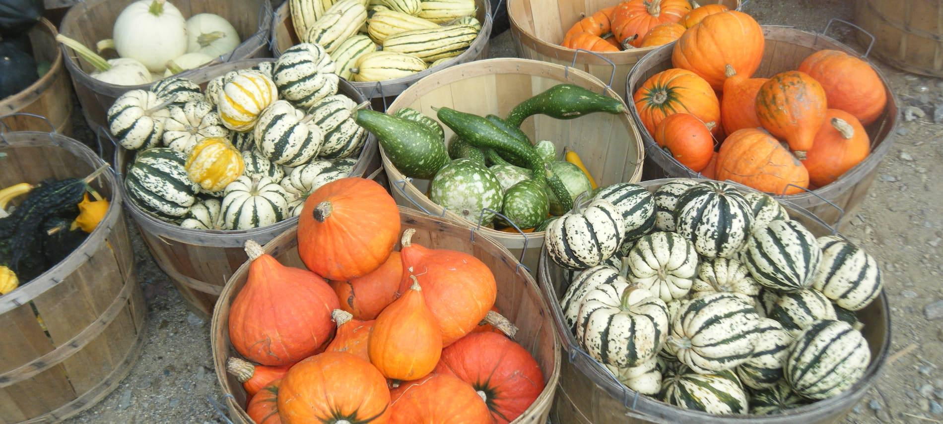 Metal pails full of colorful pumpkins and gourds,